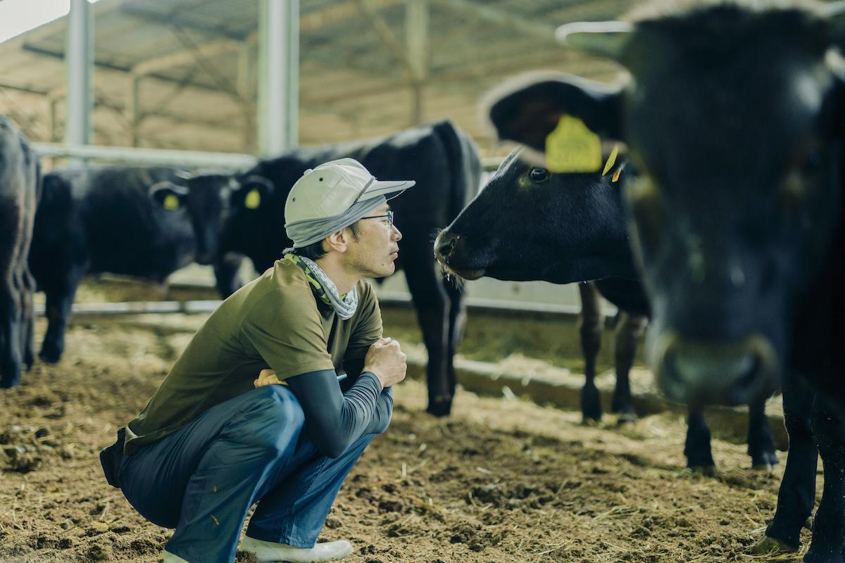 優しく牛を見つめる飼育員の写真
