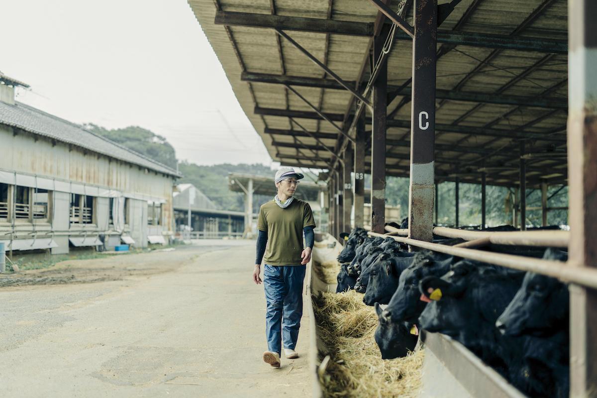 牛舎の見回りをする飼育員の写真