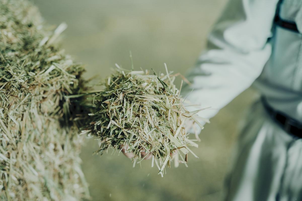 牧草の写真。