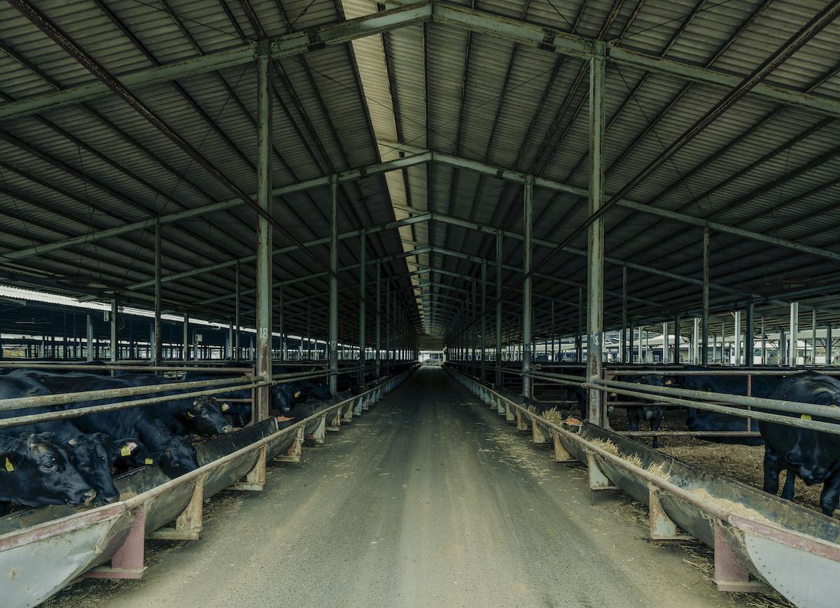 整理が行き届いた牛舎の写真